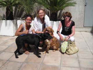 honden gratis aangeboden asiel